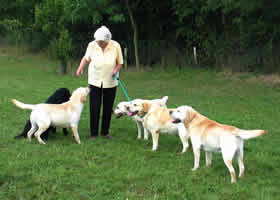 The late Peggy Rae with some her labradors